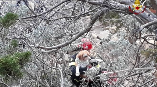 salvataggio cane cala violina 11 novembre 2018