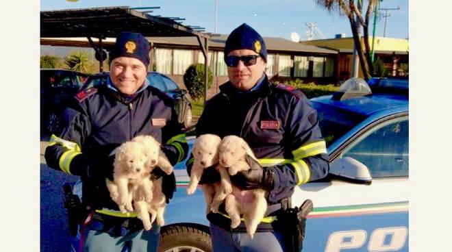 cuccioli salvati capalbio