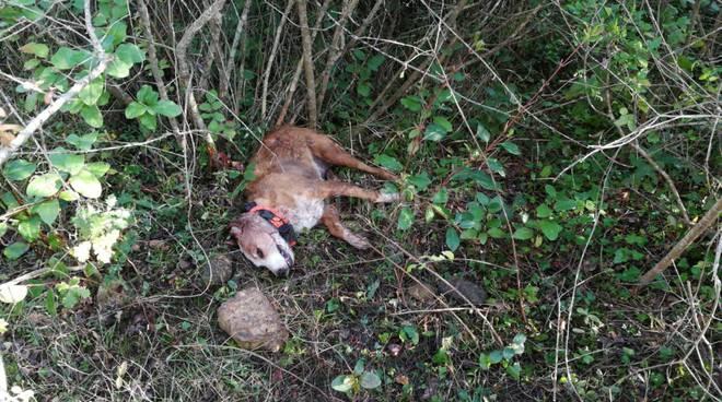 cane ucciso 2019