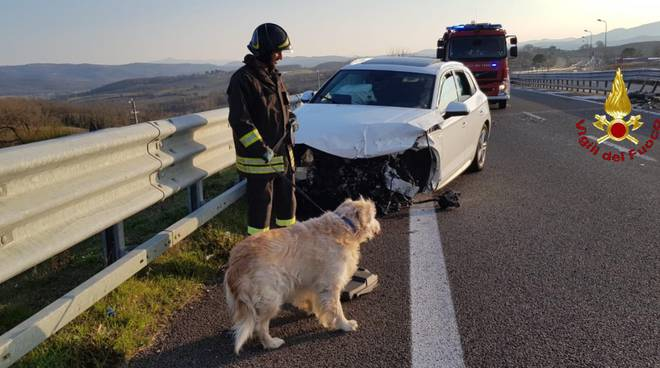 incidente con cane