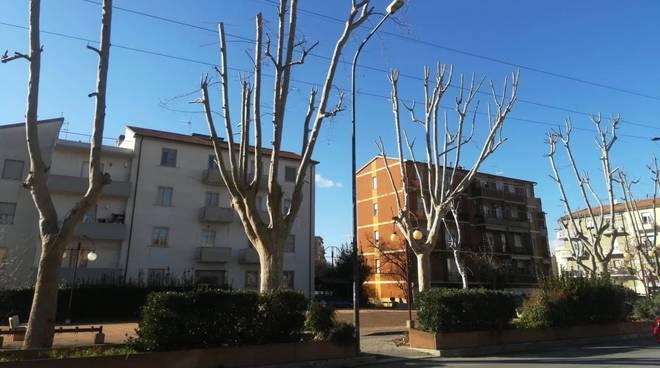 Potatura alberi via Giusti
