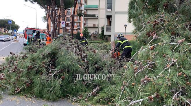 Albero caduto via Giusti 2019