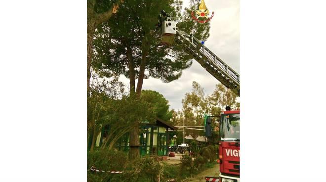 albero su bar vento mar19