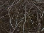 legni potatura rami taglio alberi