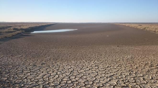 siccità Diaccia Botrona