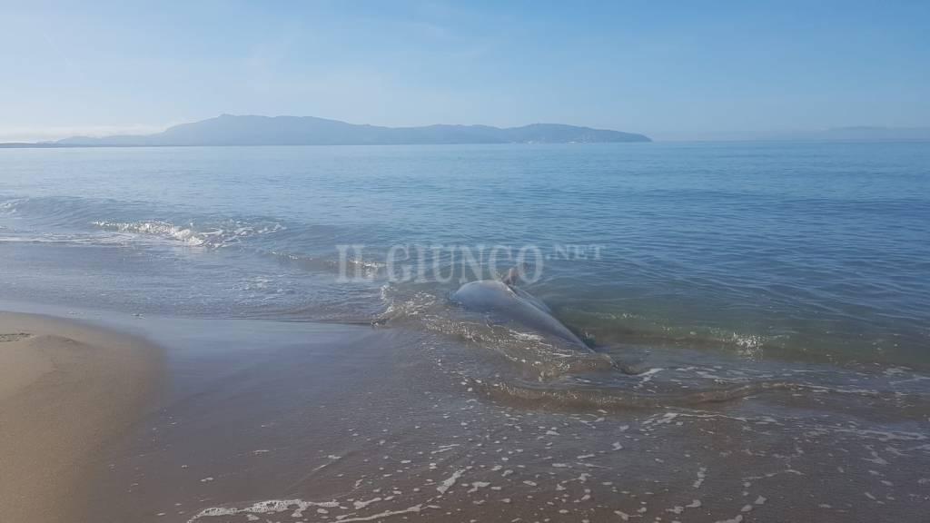 Tonno spiaggiata
