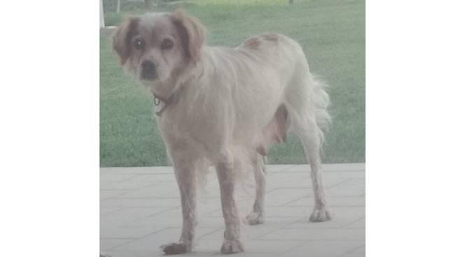 senna cane scomparso