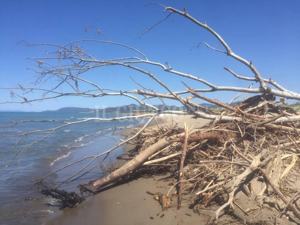 Tronchi spiaggia tra Fiumara e Le Marze