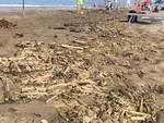 spiaggia sporca Marina