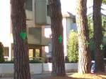 alberi via Mascagni