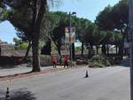 Pini via Caravaggio 2019