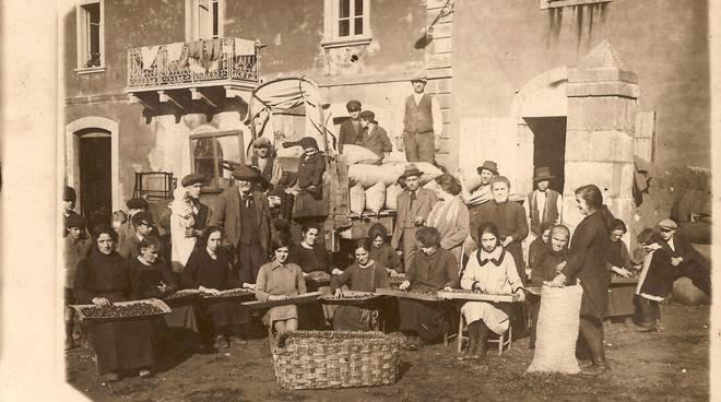 capatura castagne storica