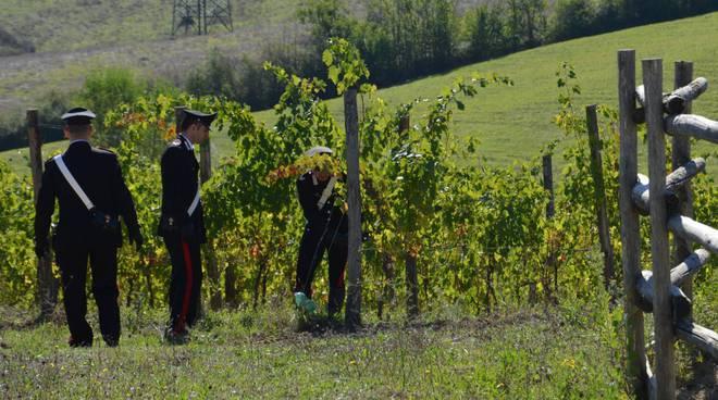 carabinieri vigne