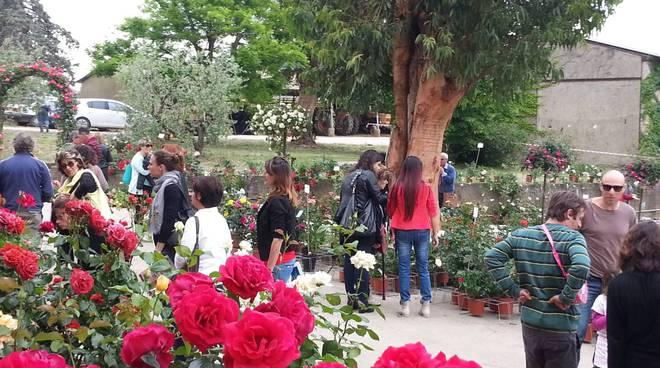 Rose Barni autunno 2019