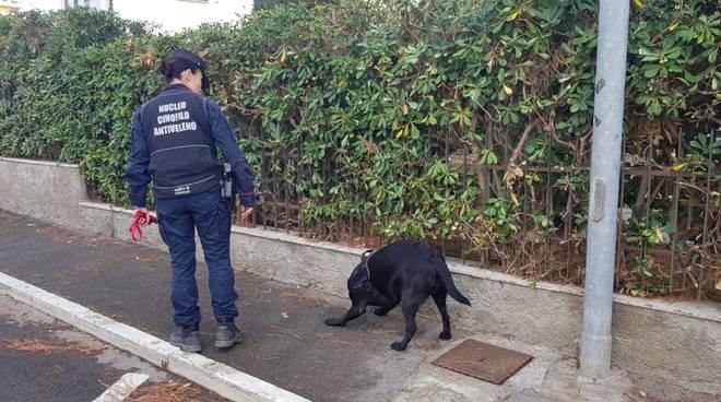 Unità cinofila antiveleno bocconi avvelenati carabinieri