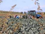 Lavoro agricoltura campagna