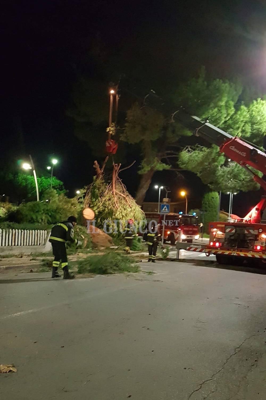 albero via Scansanese
