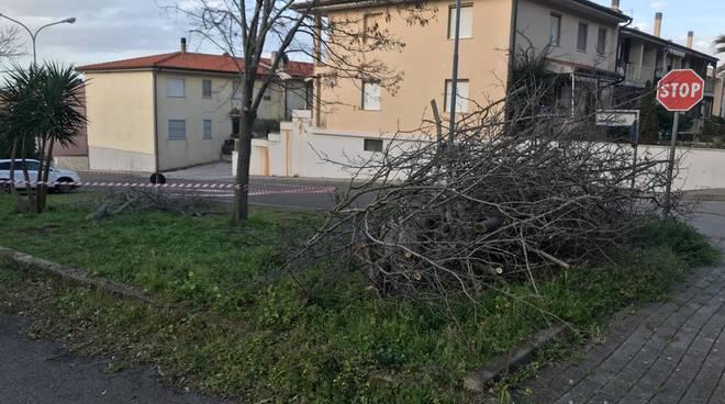 taglio alberi marzo 2020 foto di luca niccolini