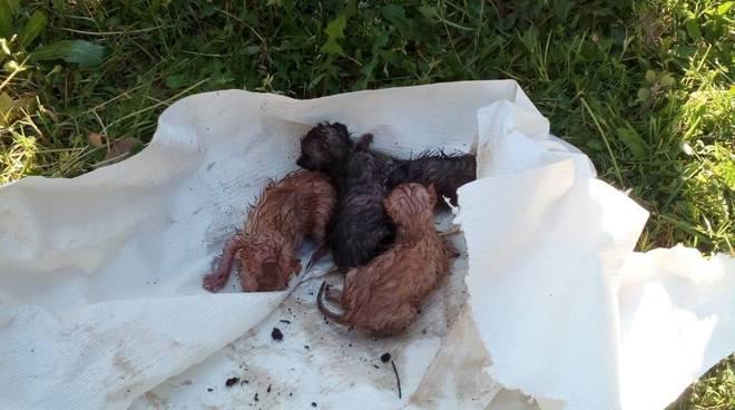 cuccioli di gatto salvati a sorano 24 aprile 2020