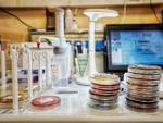 laboratorio tamponi coronavirus