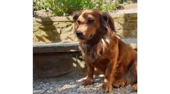 bimba - canina scomparsa maggio 2020