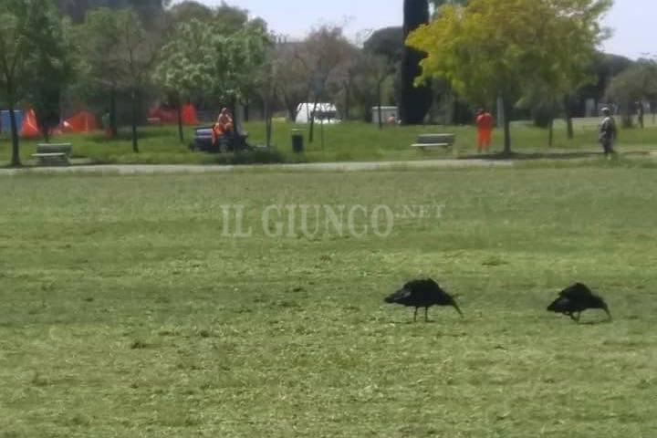 ibis pargo via Giotto