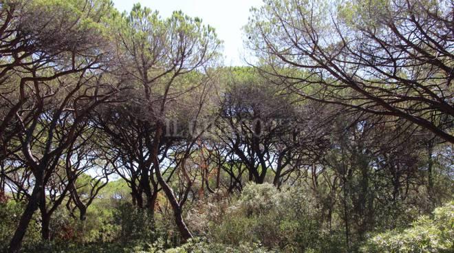 Pineta Castiglione (generica)