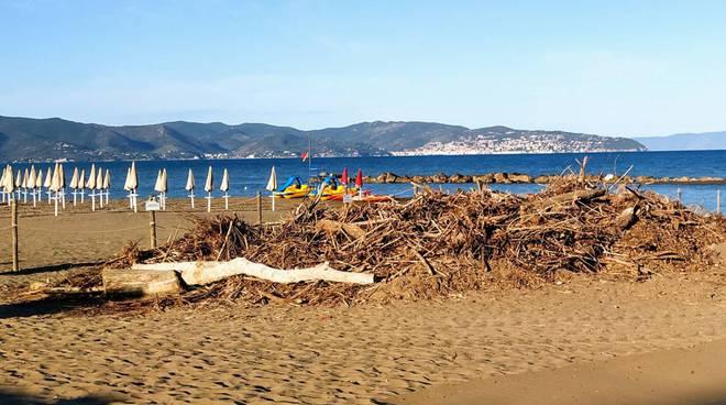 tronchi spiaggia saline
