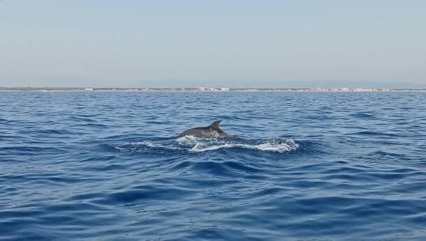 Delfini agosto 2020
