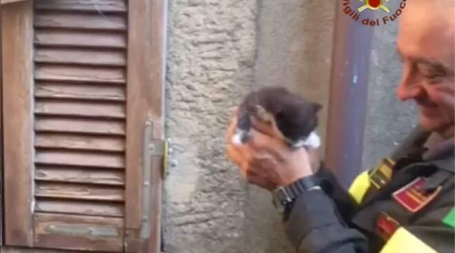 salvataggio gattino