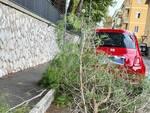 albero su auto