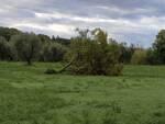 maltempo saturnia albero