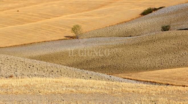 terra agricoltura Montenero Amiata