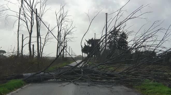 albero caduto 5 dicembre 2020