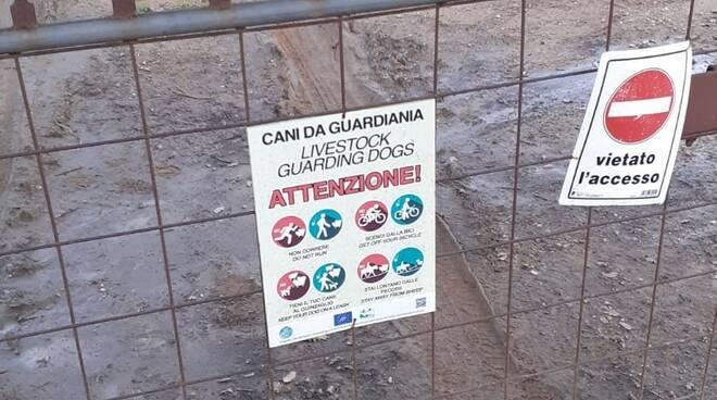 attenzione cani da guardiania
