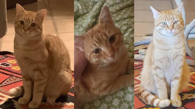 gatto romeo perso