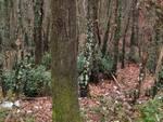 bosco inquinato