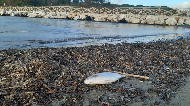 moria di pesci canale