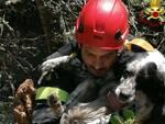 cane salvato massa 17 aprile 2021