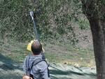 orti in carcere raccolta olive olio