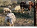 rifugio animali