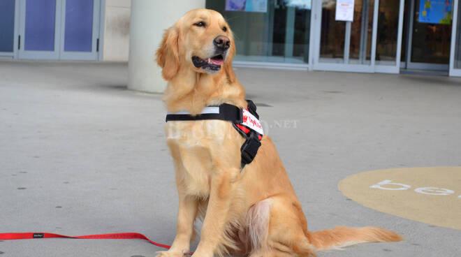 Comunicato Stampa - Dog4Life in Europa con il Progetto FYDO per la riabilitazione delle vittime vulnerabili.