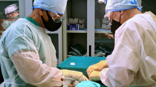 Servizio Veterinario Asl 2021