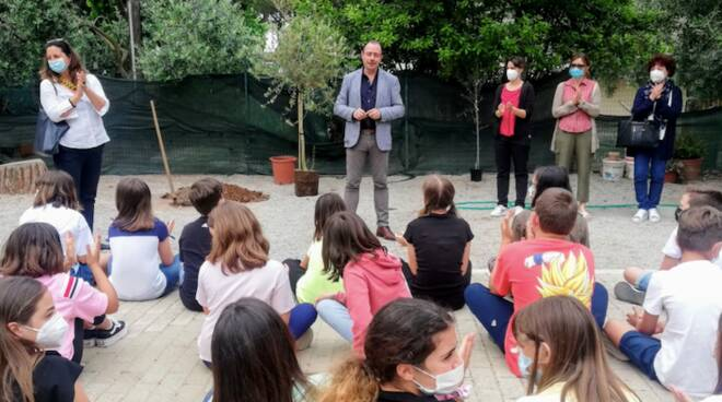 donazione olivo
