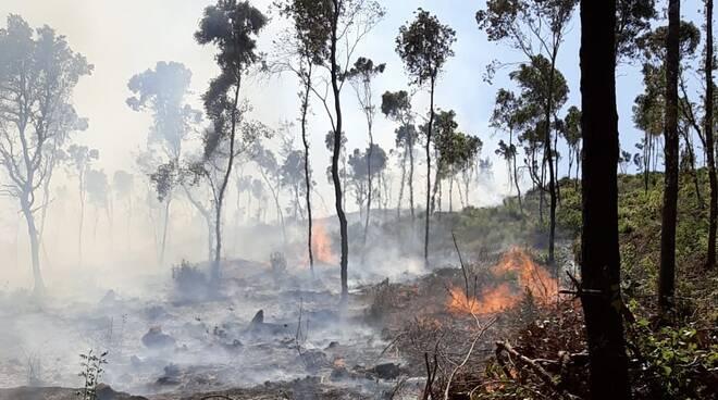 incendio Argentario luglio 2021