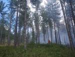 incendio Cinigiano 19 agosto 2021