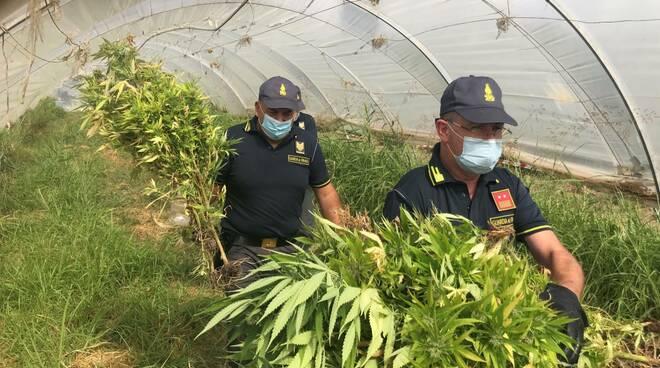 controlli 18/09 - 100 piante marijuana