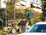 Taglio alberi via Massetana Foll