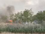 incendio Cemivet